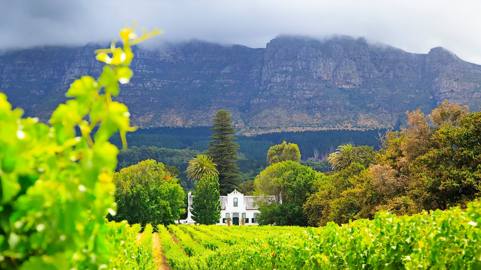 cape-winelands-hotairbaloon-4
