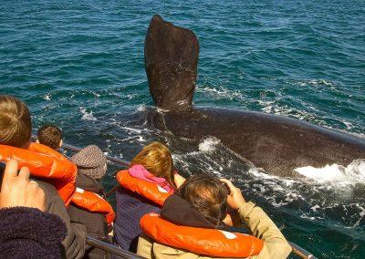 hermanus-whales-3