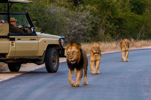 Kruger National Park Tours