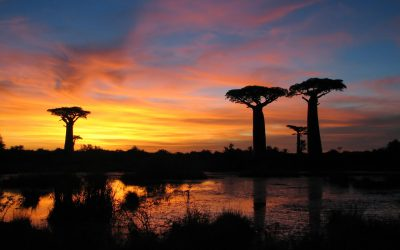 Get Your Adventure Travel On In Madagascar
