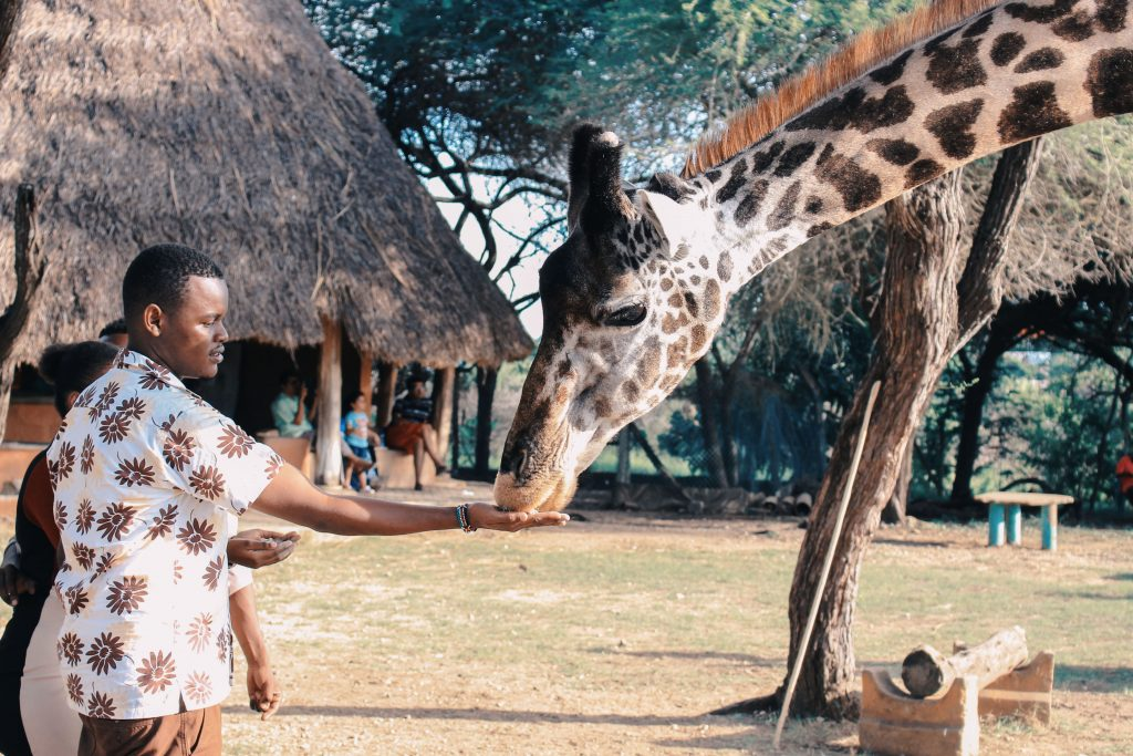 Wild Life Africa