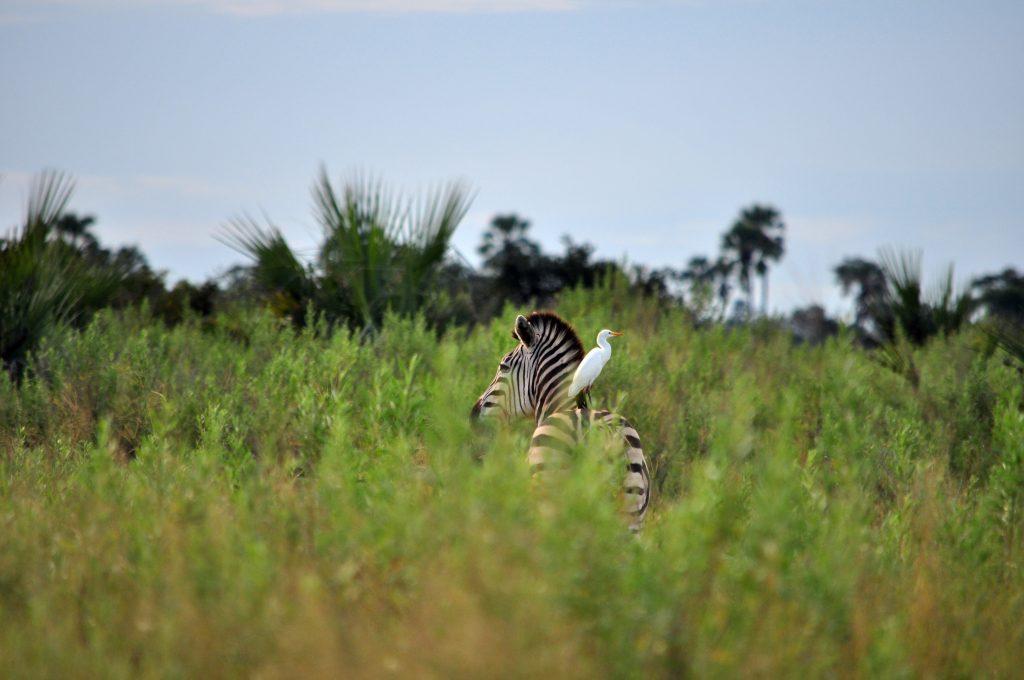 Moremi Game Reserve - Botswana Trip