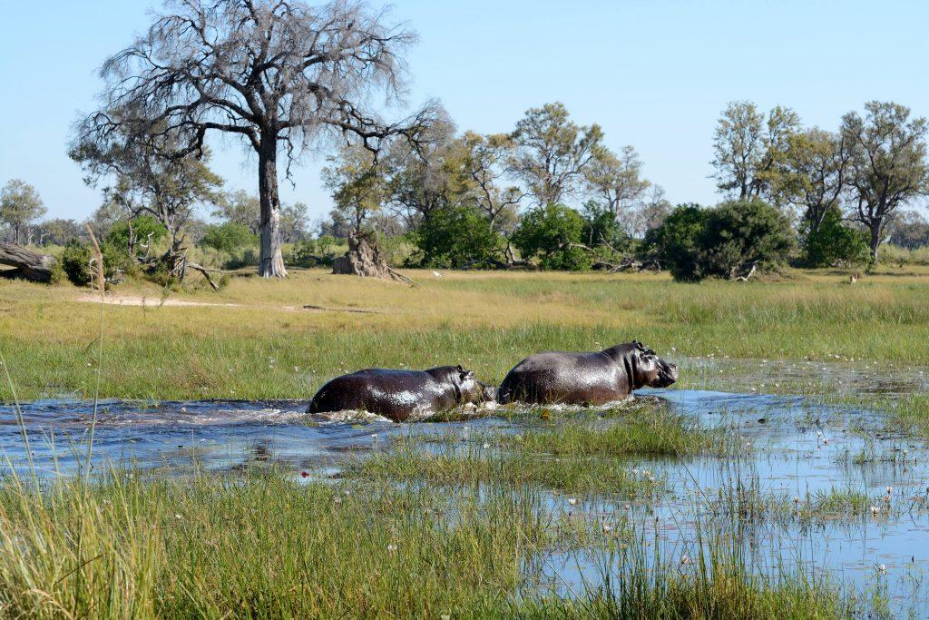 Okavango-Delta-Botswana-trip